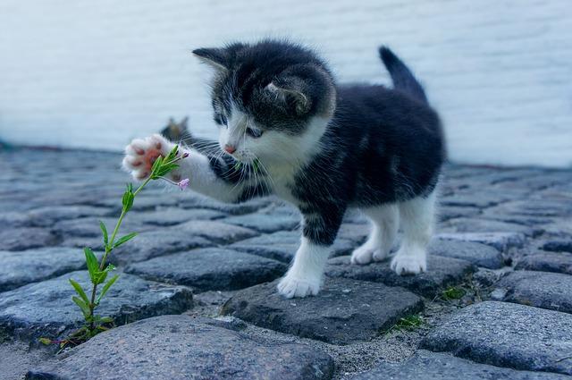 ein Sanfter Tatzenschlag verbiegt die Blume
